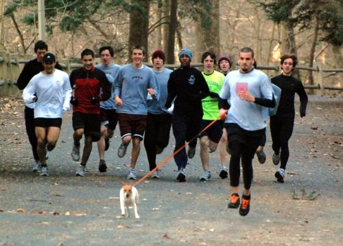 run, dog,run