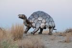 turtle dino