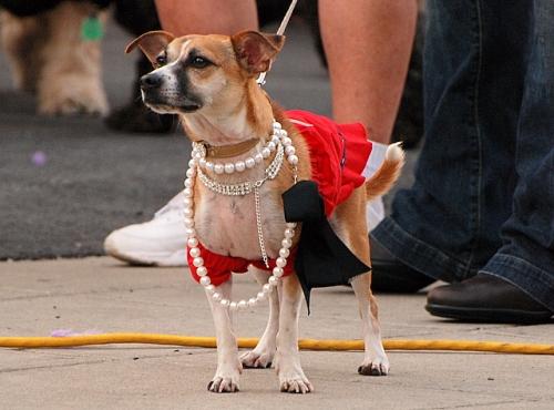 Dog parade, Narberth, PA, June 6, 2008
