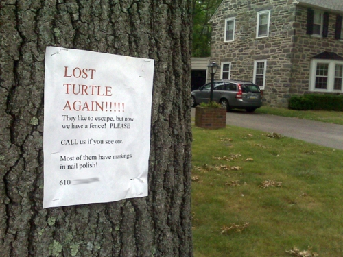 Lost turtle sign