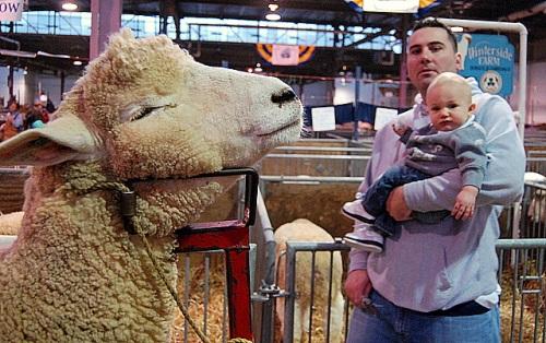 Dad, boy & sheep