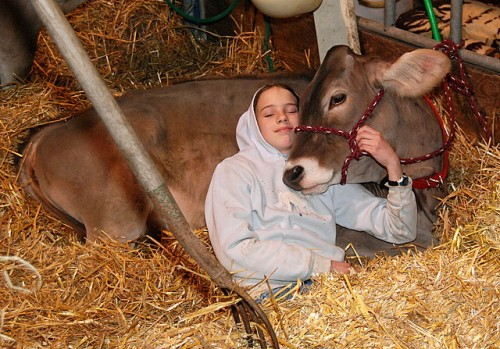 Girl & her Brown Swiss