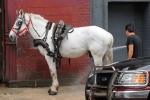 Hosed horse