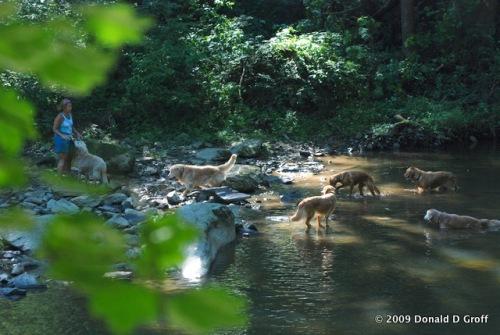 Hounds of Wissahickon Creek