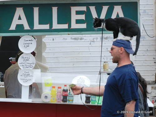 Cat entertainer, San Gennaro