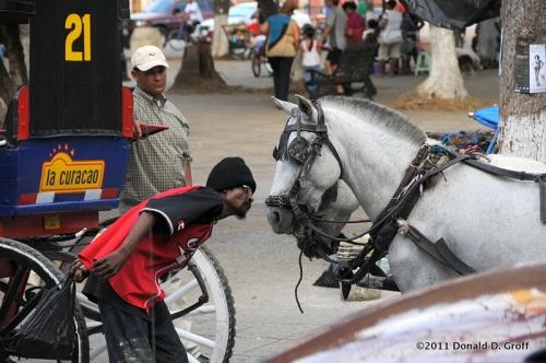 carriage horse tormenter, granada, nicaragua
