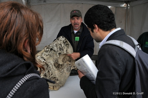 elephant skull, Academy of Natural Sciences tent, Philadelphia Science Carnival.