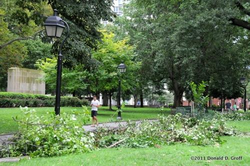 Washington Square, fallen branches